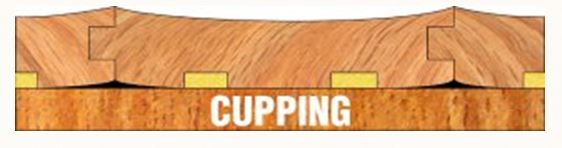 profile image of cupping solid floorboards